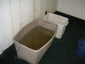 This container was empty on Friday when we left for the weekend. Now it has about 10 inches of water in it.